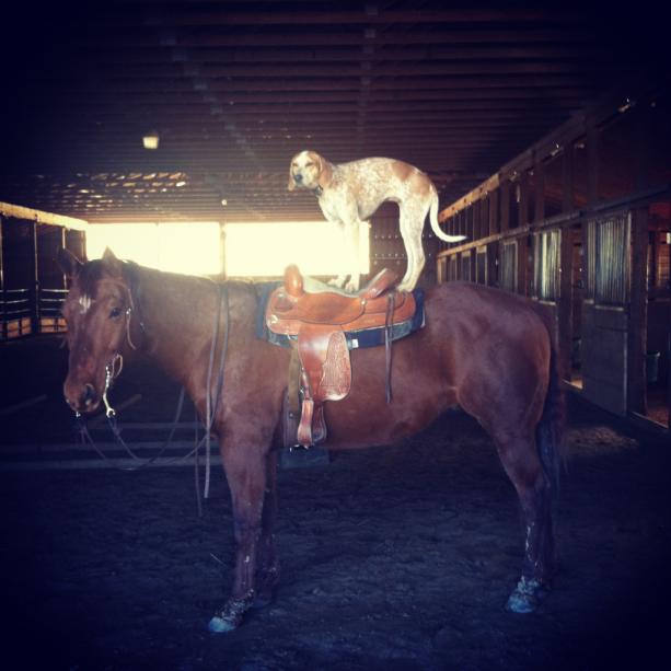 Maddie on things Pferd